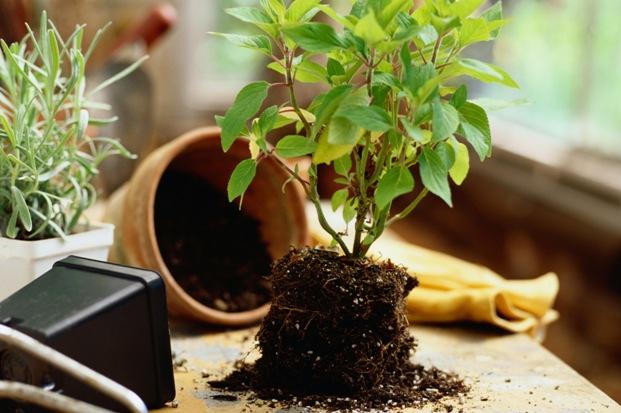 Уход за комнатными растениями в начале весны