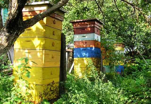 Особенности содержания пчел в многокорпусных ульях