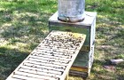 Вода для пчел