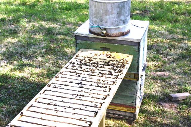 Пчеловодство все своими руками