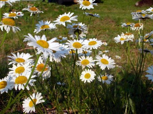 Вытяжки инсектицидных растений