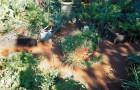 Проект сада «Речные пути»