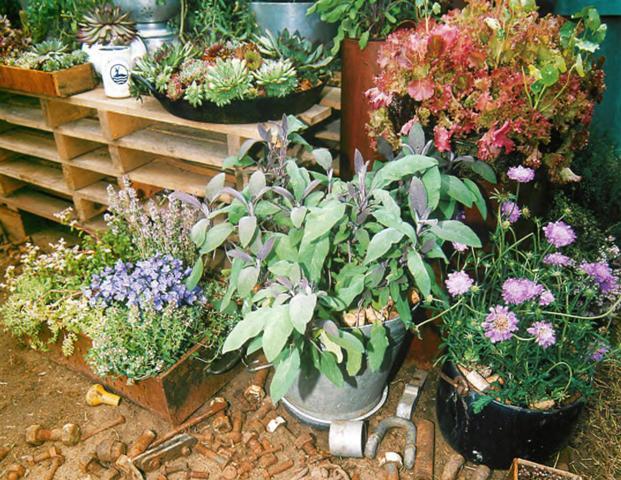 Проект сада «Цветущий сад на пустыре»