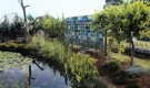 Проект сада «Виноградники на болоте»