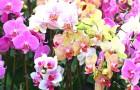 5 удивительных фактов об орхидее