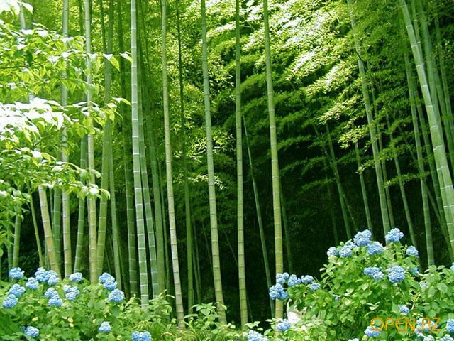 Бамбук и злаковые травы для японского сада