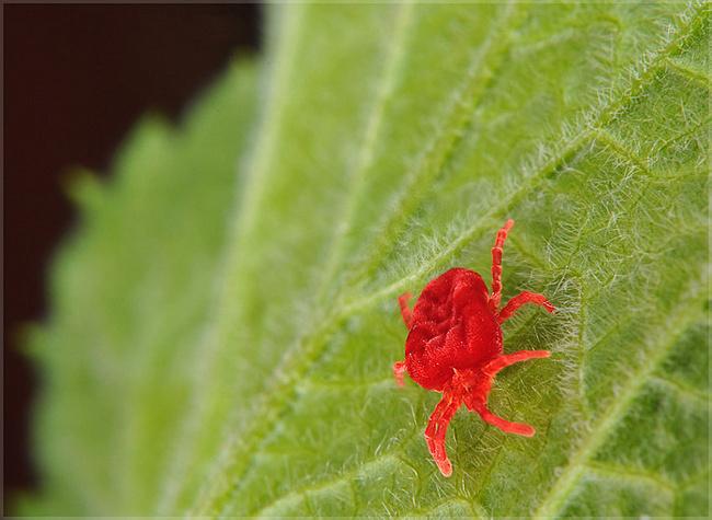 Борьба с паутинным клещом на территории сада
