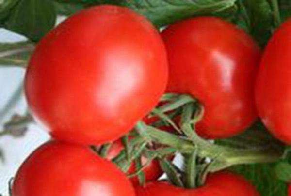 Сорт томата: Челбас   f1