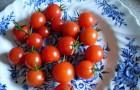 Сорт томата: Черешенка