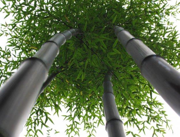 Древесина и бамбук