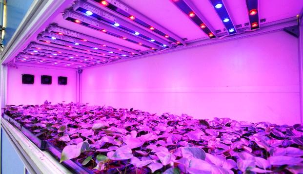 Экономный свет для тепличных растений