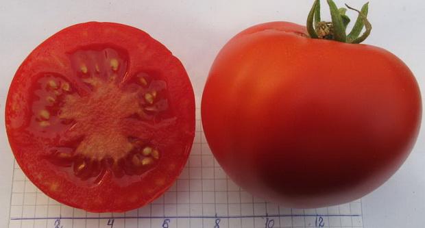 Сорт томата: Экстремал
