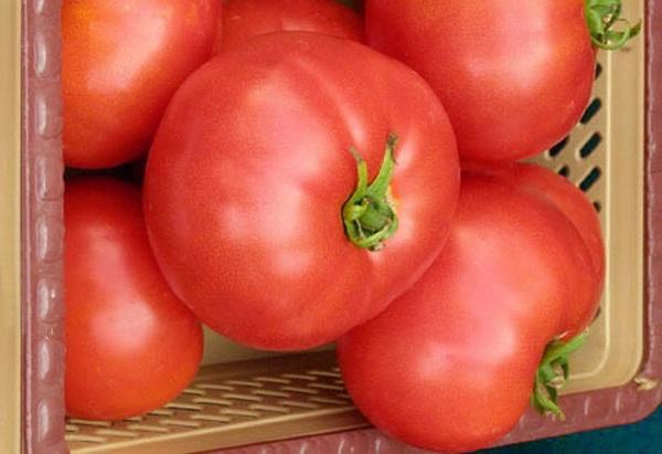 Сорт томата: Элегро   f1