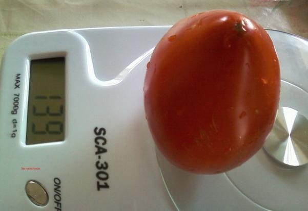 Сорт томата: Эм чемпион