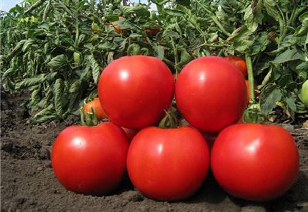 Сорт томата: Эмир   f1