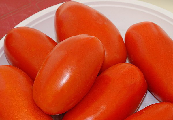 Сорт томата: Эрколь   f1