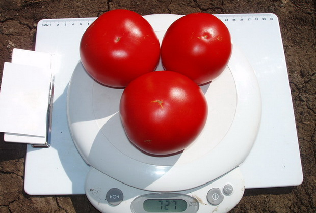 Сорт томата: Эсмеральда   f1