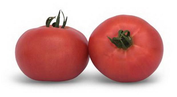 Сорт томата: Эйфория   f1
