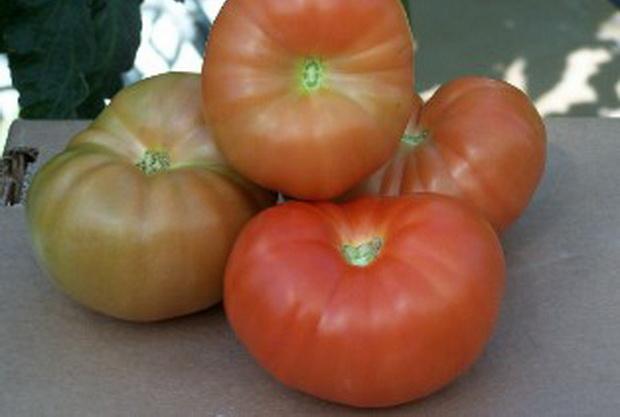 Сорт томата: Фаино   f1