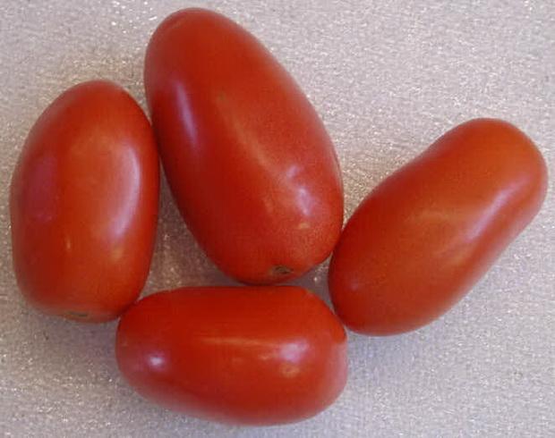 Сорт томата: Фэмили