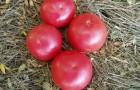 Сорт томата: Фенда f1