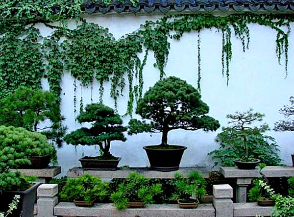 Форма и текстура растений для японского сада
