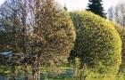 Формирование кроны плодовых деревьев (Видео)