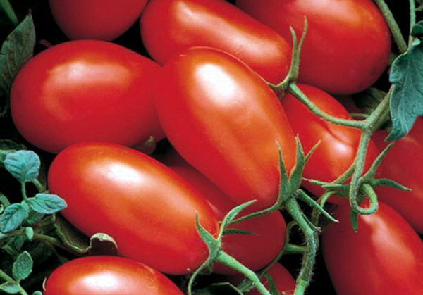 Сорт томата: Форонти   f1