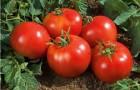 Сорт томата: Форте маре f1