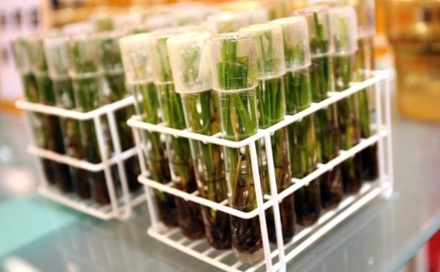 ГМО заставляет голодать один миллиард людей