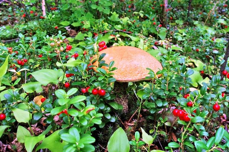 Грибные места: секреты опытных грибников
