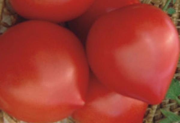 Сорт томата: Хали-гали   f1