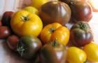 Сорт томата: Харизма f1