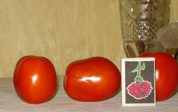 Сорт томата: Хортица   f1