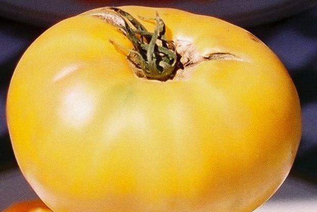 Сорт томата: Хурма