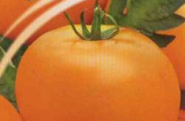 Сорт томата: Хуторской засолочный