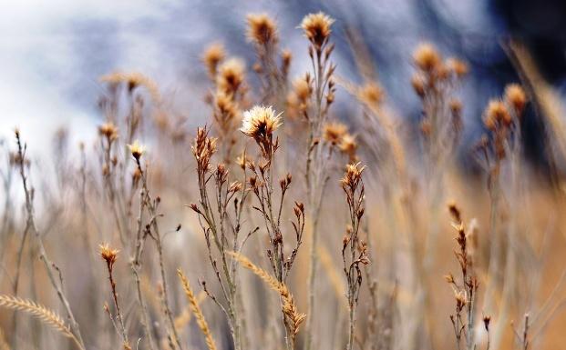 Как растения узнают о сухости воздуха