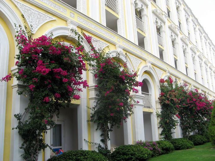 Как украсить вход в дом лианами
