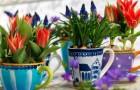 Календарь цветения луковичных (Видео)