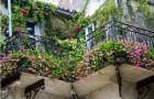 Лианы в оформлении балконов