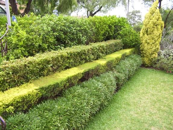 Механические методы борьбы с вредителями живых изгородей
