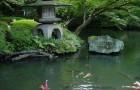 Обрезка и формирование растений в японском саду