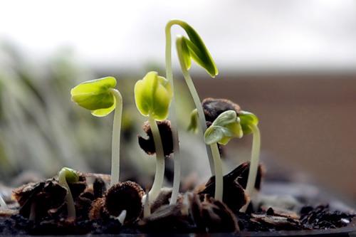 Общие требования к выращиванию рассады