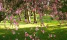 Обычная обрезка растений японского сада
