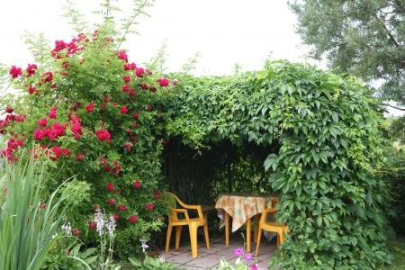 Опоры-стены для выращивания лиан