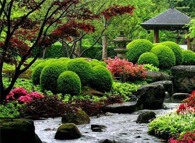 Особые растения для японского сада