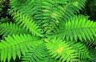 Папоротники (Видео)