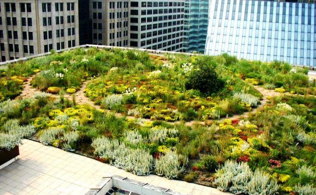 Партизанское садоводство спасёт мир