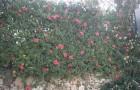 Переносные живые изгороди
