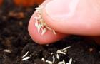 Подготовка и высевание семян
